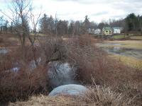 Pumpkin Hollow Brook downstream view