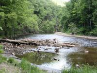 Large Woody Debris in Deerfield