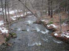 Williamsburg Road tributary, looking downstream