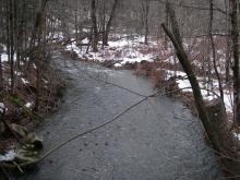 Williamsburg Road tributary1, looking upstream