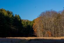 Floodplain meadow along Deerfield